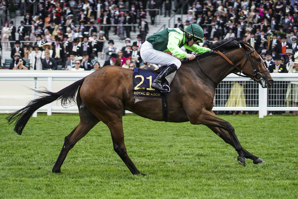 Settle For Bay Set For Dubai Trip