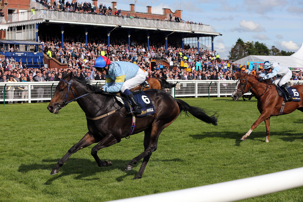 Dead-Heat In Ayr Gold Cup