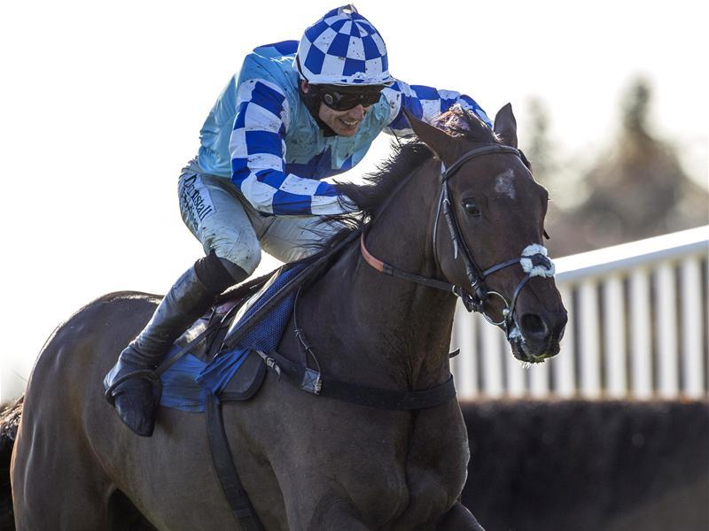 God's Own Aimed At Punchestown
