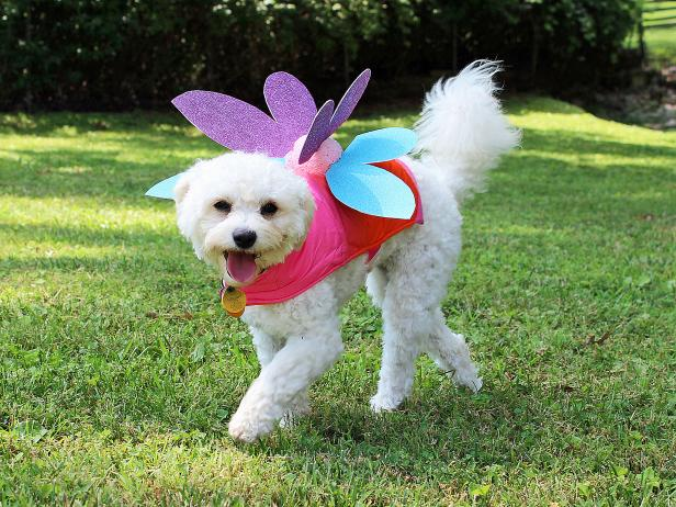 What Are The 10 Pet Costumes Ideas?